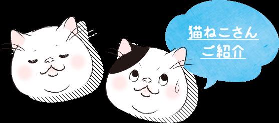 猫ねこさんご紹介