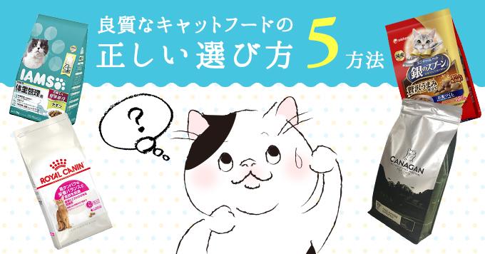 キャットフードの正しい選び方|愛猫の健康を考えた5つのポイント