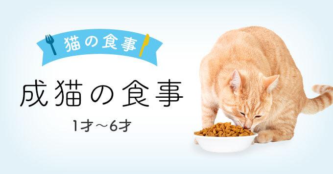 成猫期の猫の食事|1~6才成猫向けキャットフード