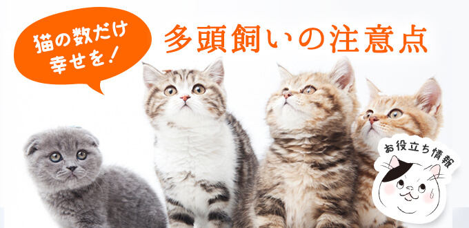 猫の多頭飼いのメリット・デメリットと注意点