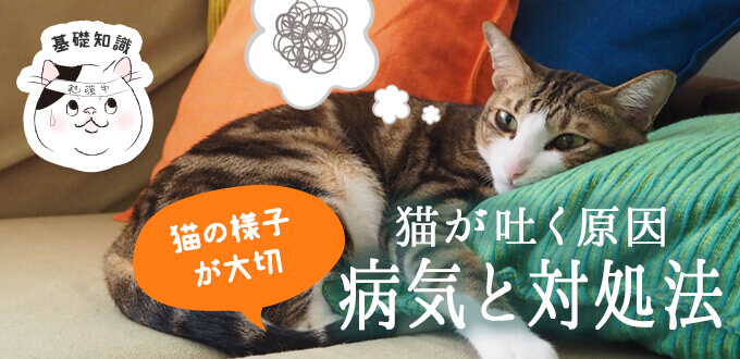 猫が吐く原因は?考えられる病気と対処法