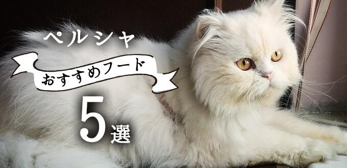 ペルシャ猫におすすめのキャットフード5選