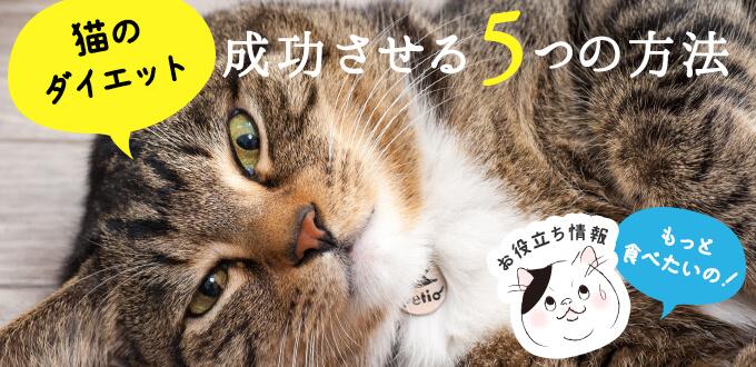 猫のダイエットを成功させる5つの方法