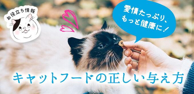 キャットフードの正しい与え方~愛猫の健康のために~
