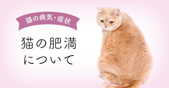 猫の肥満アイキャッチ