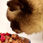 【子猫や高齢猫に】キャットフードの正しいふやかし方と注意点