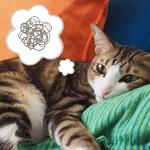 【獣医師監修】猫が吐くときにチェックすべき12のポイントと対処法