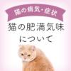 猫の肥満サムネイル