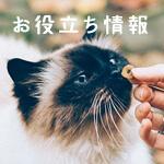 【獣医師監修】キャットフードの正しい与え方~愛猫の健康のために~