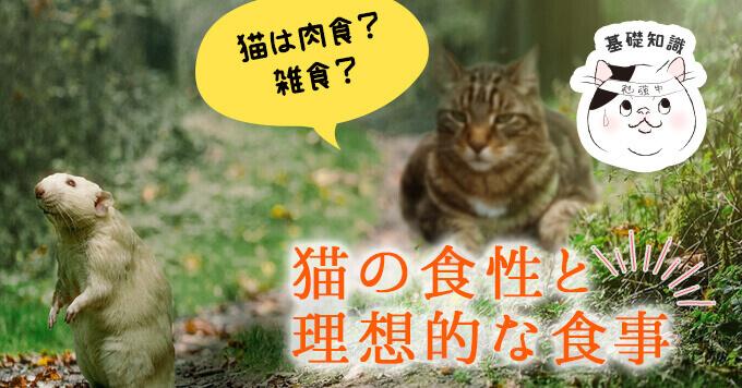 猫は肉食?雑食?猫の食性と理想的な食事
