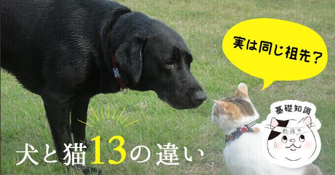 実は同じ祖先?運動能力や食性に関する犬と猫の13の違い