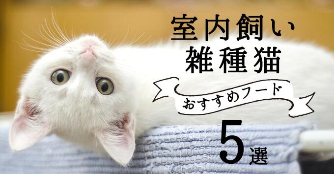 室内飼いの雑種猫におすすめのキャットフード5選