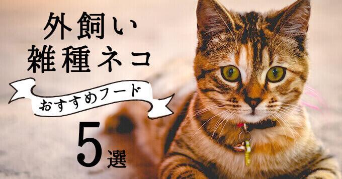外飼いの雑種猫におすすめのキャットフード5選
