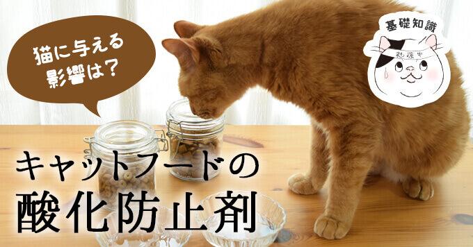 キャットフードに酸化防止剤が使われる理由と猫に与える危険性