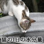 猫に必要な1日の水分量は?水分不足による健康への影響