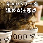 食いつきが気になる猫に!キャットフードを温める理由と注意点