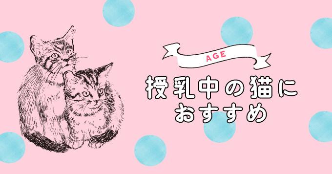 授乳中の猫に与えたいおすすめキャットフード5選