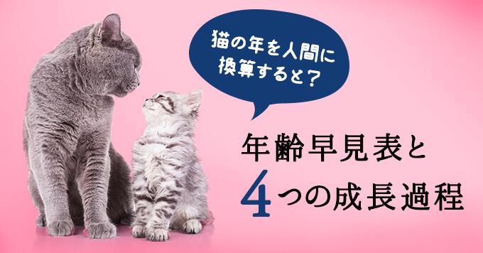 猫の年齢を人間に換算すると?|年齢早見表と成長過程