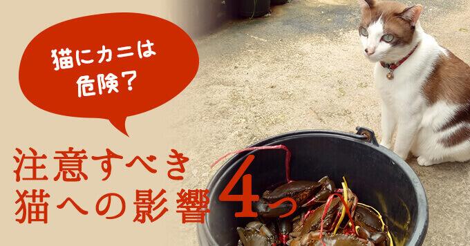猫にカニ(蟹)は危険?注意すべき4つの猫への影響