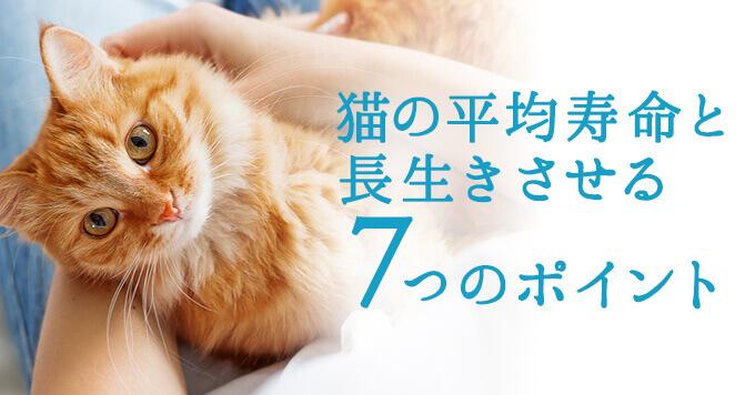 猫の平均寿命と長生きさせる7つのポイント