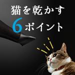 ドライヤー嫌いの猫を上手く乾かす6つのポイント
