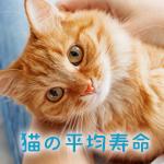 【獣医師監修】猫の平均寿命と長生きさせる7つのポイント
