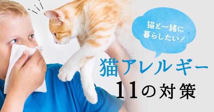 猫アレルギーでも猫と一緒に暮らすための11の対策