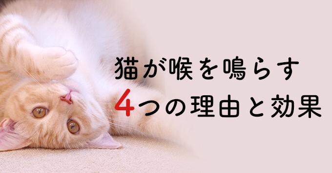猫がゴロゴロと喉を鳴らす4つの理由と効果