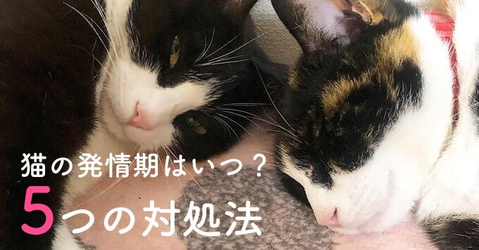 (仮)猫の発情期はいつ?知っておきたい5つの対処法