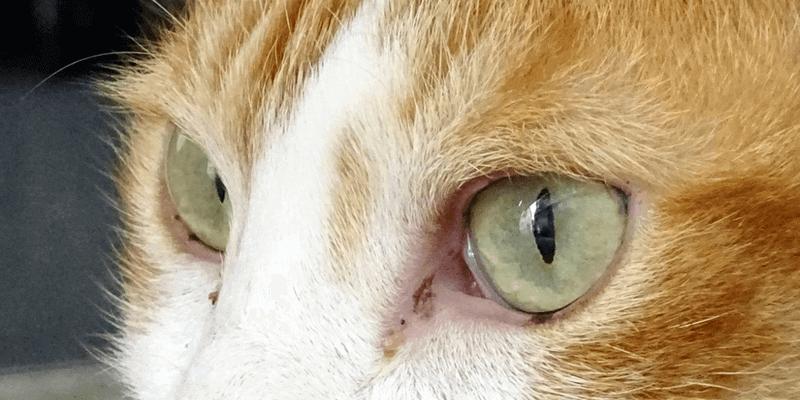 猫_縦長の瞳孔