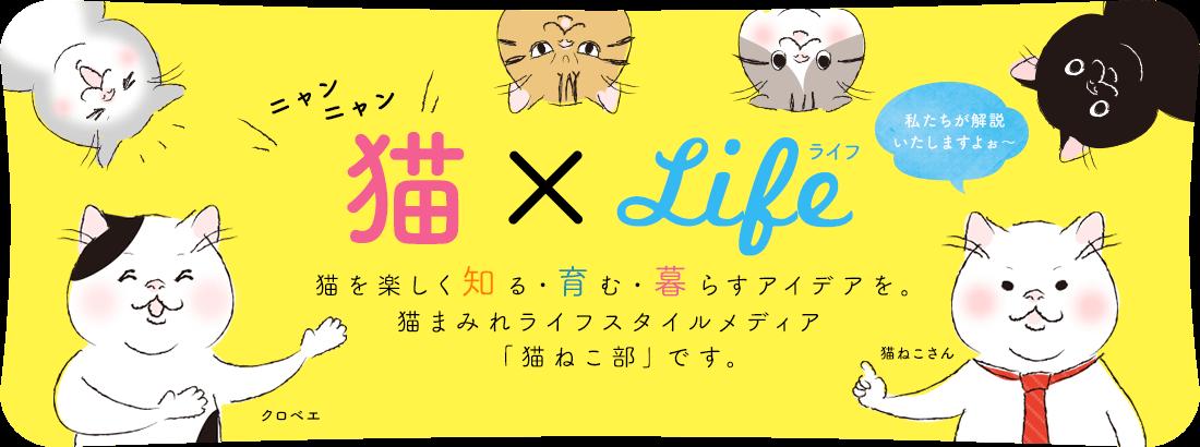 猫×ライフ 猫を楽しく知る・育む・暮らすアイデアを。猫まみれライフスタイルメディア「猫ねこ部」です。