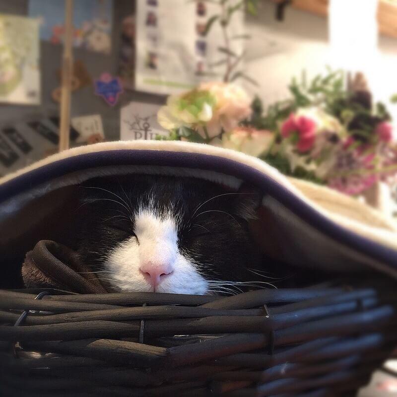寝るキャスパー