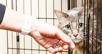 動物愛護団体の取組ご紹介