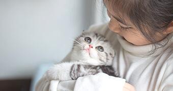 猫を迎えよう!