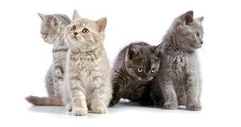 猫種別飼い方
