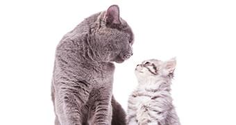 年齢(ステージ)別猫の飼い方