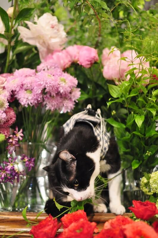 花を食べるキャスパー
