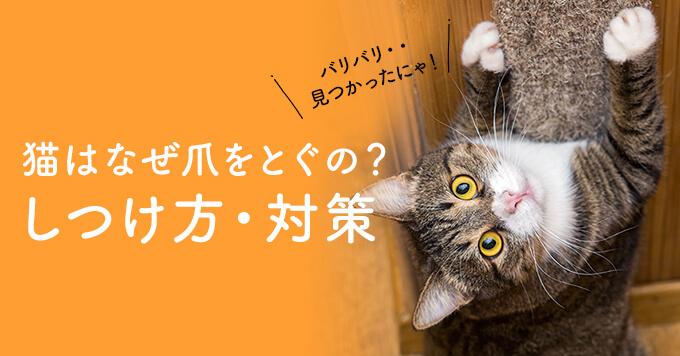 猫はなぜ爪をとぐの?爪とぎのしつけ方や爪とぎ対策をご紹介