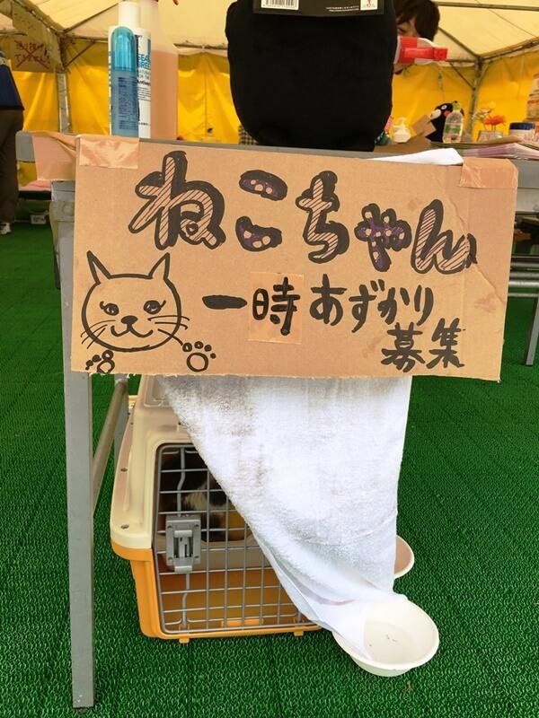 2016熊本地震益城町避難所迷い猫
