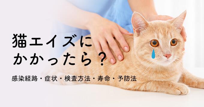 検査 猫 エイズ