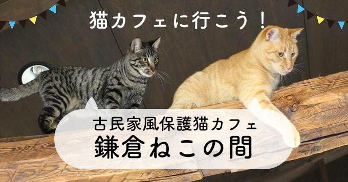 猫も人もリラックスできる古民家風保護猫カフェ~鎌倉ねこの間~