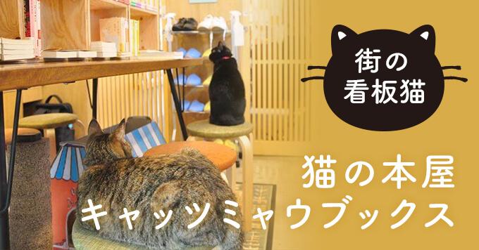 【看板猫】猫と本屋がお互いに助け合う~猫の本屋キャッツミャウブックス