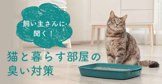 猫と暮らす部屋の臭い対策~飼い主さんイチオシの消臭グッズもご紹介