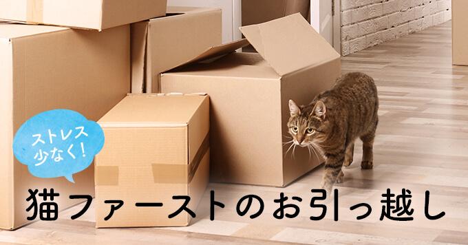 猫のストレスを軽減!猫ファーストのお引っ越し