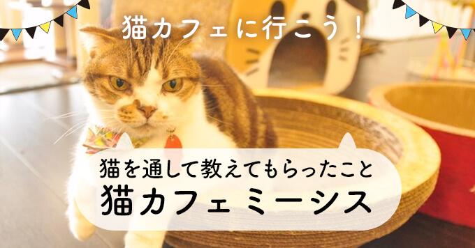 猫への想いを馳せてくれる人が増えたら~猫カフェミーシス~