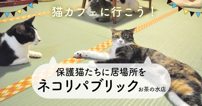保護猫たちに居場所を~ネコリパブリックお茶の水店取材