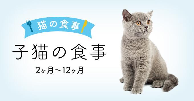 子猫の食事 生後1,2ヶ月〜12ヶ月