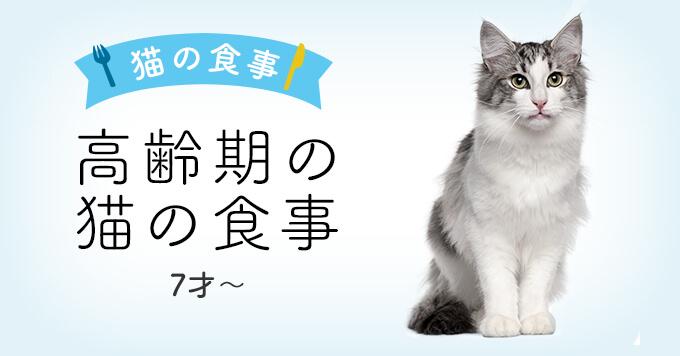 高齢期の猫の食事について | 7才〜