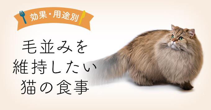 毛並みを維持したい猫の食事 | 毛並み維持向けキャットフード