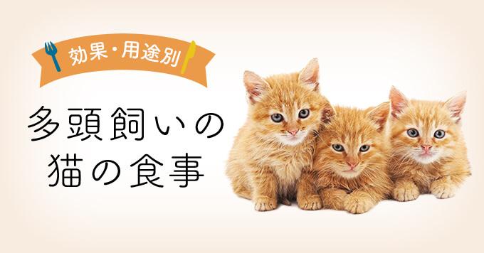 多頭飼いの猫の食事 | 多頭飼い向けキャットフード